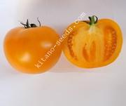 Семена желтого тепличного томата ЯМАМОТО F1